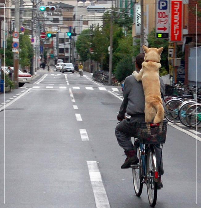 doceelegancia_bicycle9